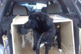 перевозка животных в багажнике