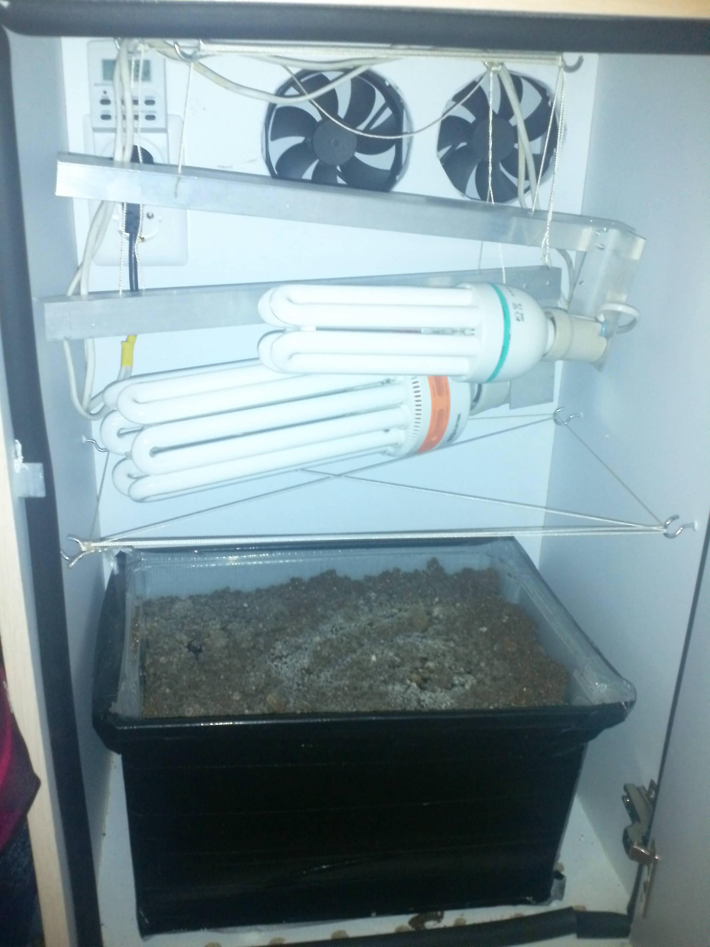 Гроубокс для выращивания грибов 36