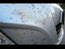 Как лучше очистить бампер от следов насекомых